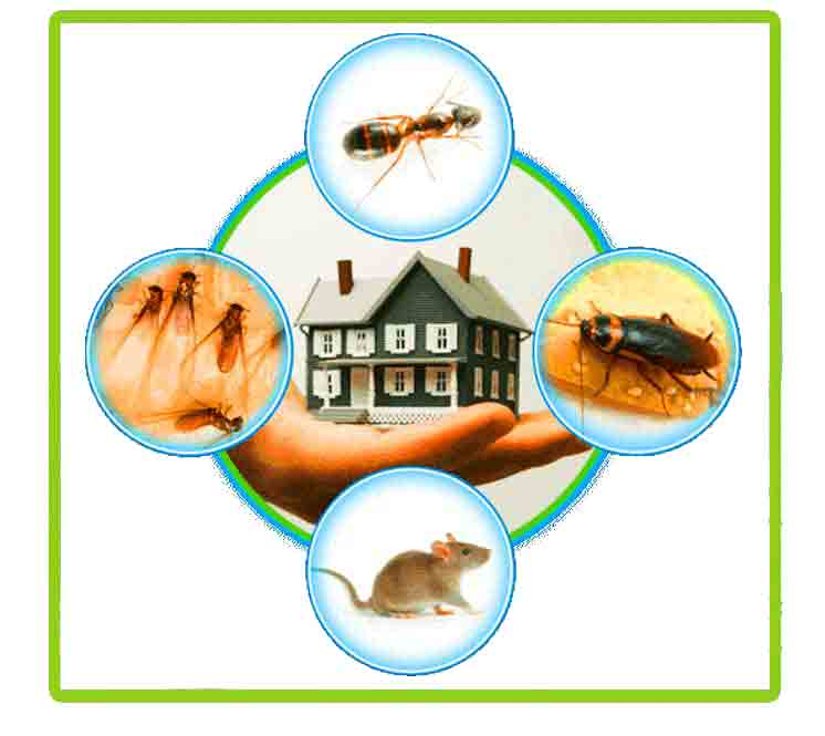 Pest Control Management In London